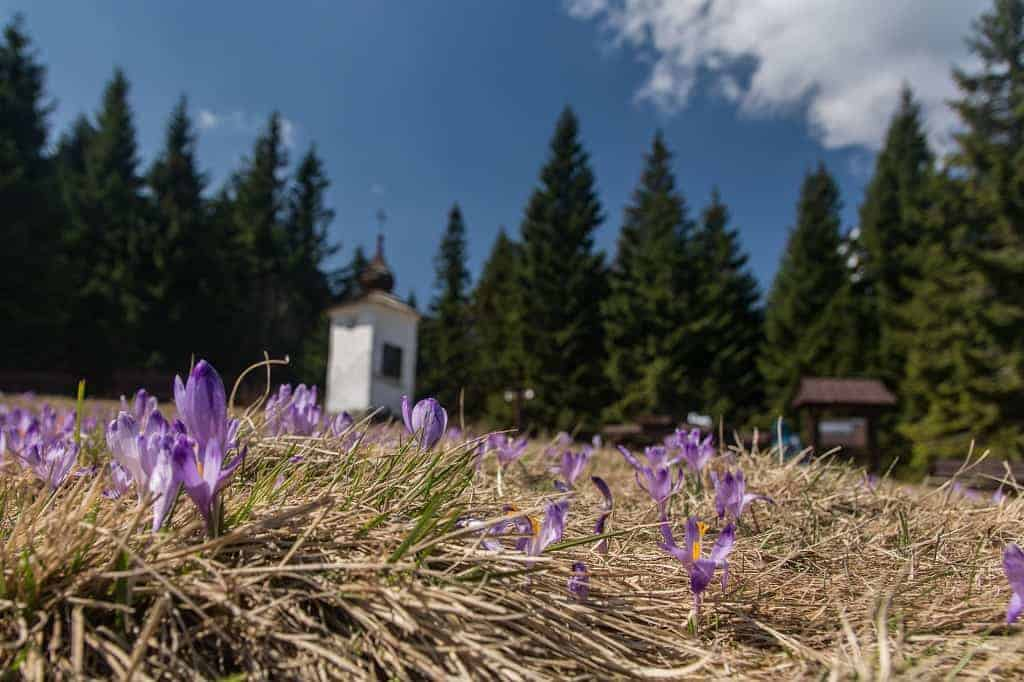 Bungalowa Kapliczka Gorce
