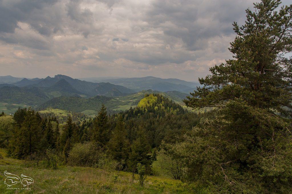 Male Pieniny - Homole Szczawnica (2)