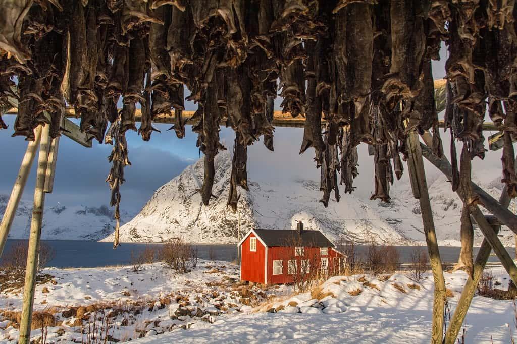 Lofoty zimową porą