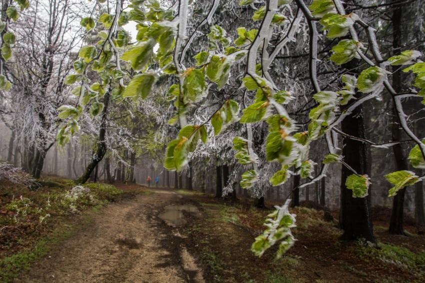 Beskid Sądecki - najpiękniejsze szlaki Wierchomla