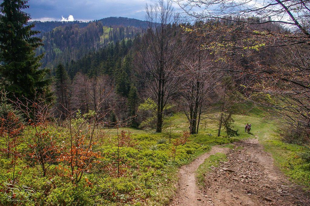 Beskid Sądecki - najpiękniejsze szlaki NIEMCOWA