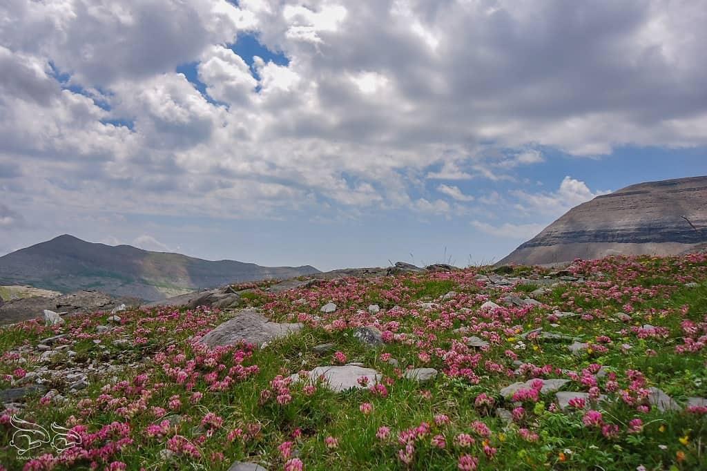 Pireneje Ordesa