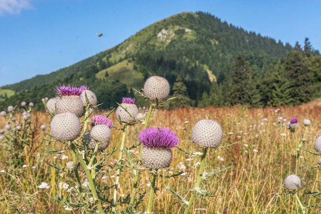 Wielka Fatra - szlaki na Słowacji