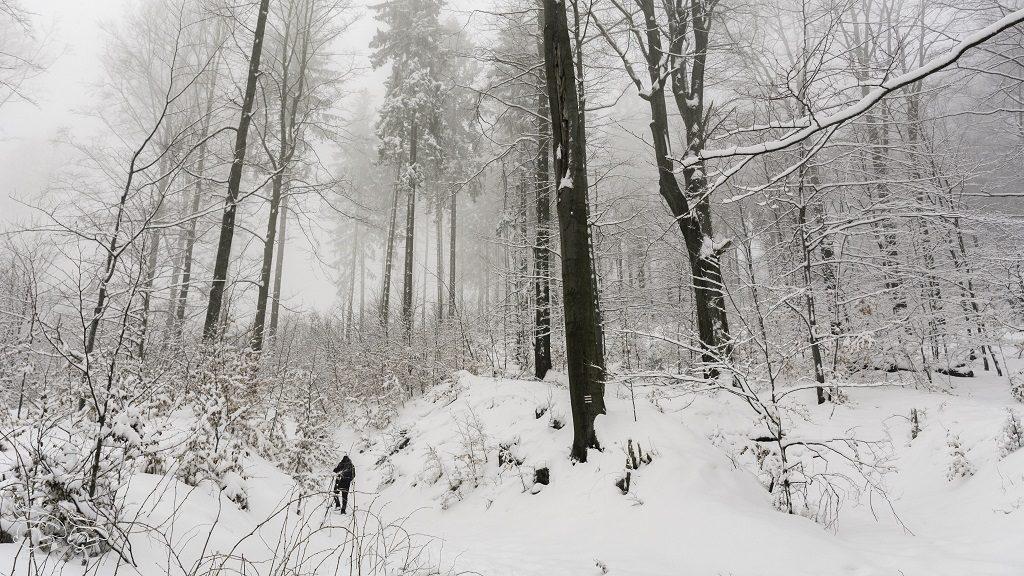 szlak na Borową