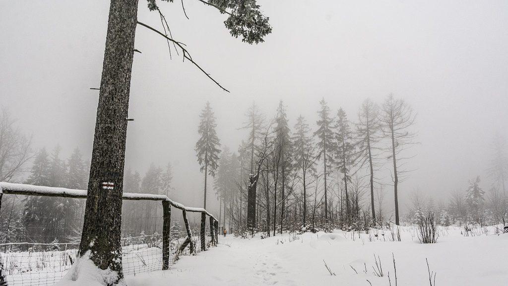 Borowa wieża szlak