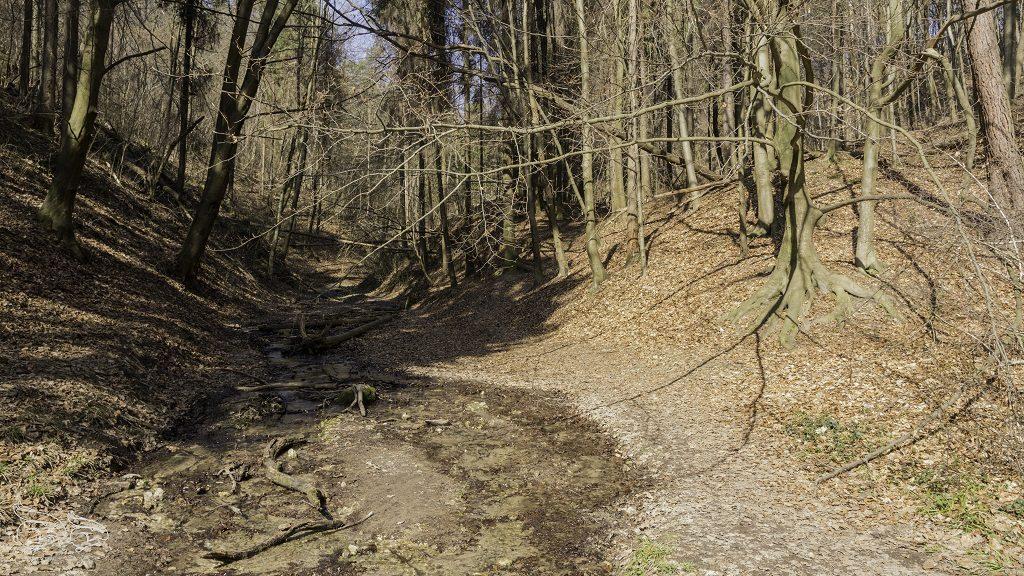 Dolina Bolechowicka trasa