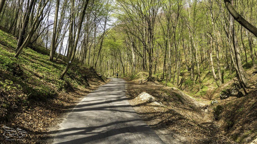 Dolina Będkowska Trasa