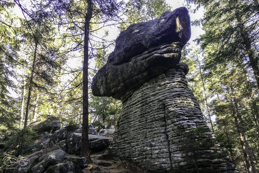 skalne grzyby trasa