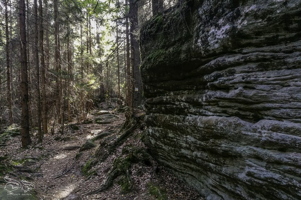 skalne grzyby szlak