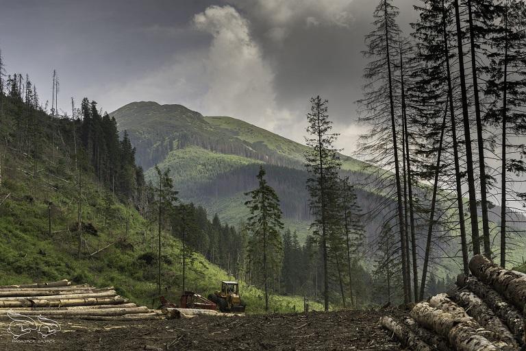 dolina chochołowska trasa i widoki