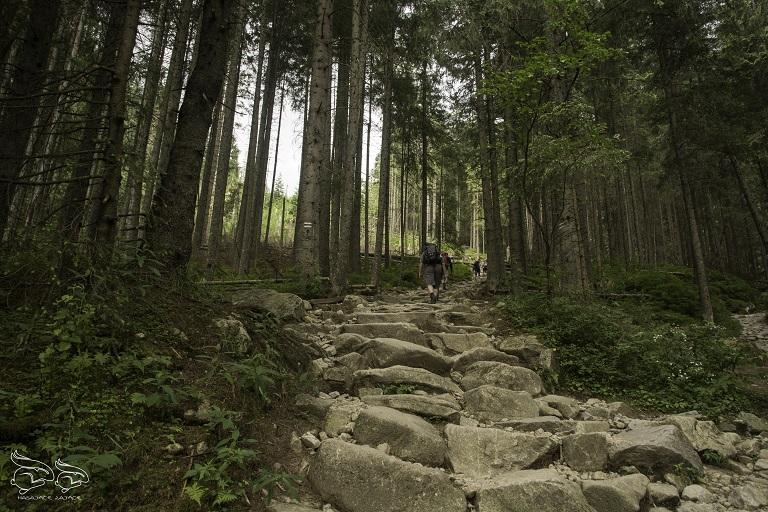 dolina 5 stawów szlak - trasa na Szpiglasowy Wierch