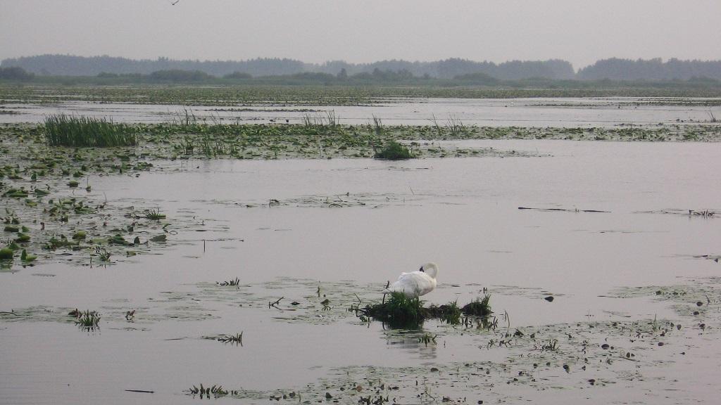Jezioro Drużno