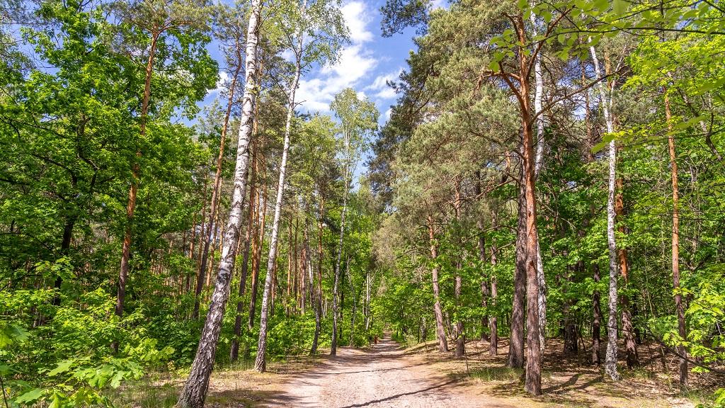 Kampinoski Park Narodowy szlaki