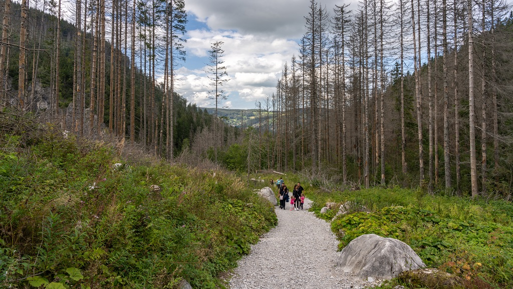 Dolina Małej Łąki Szlak