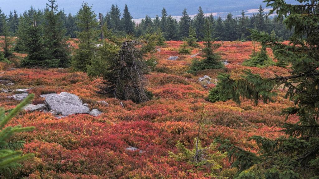 góry izerskie jesień