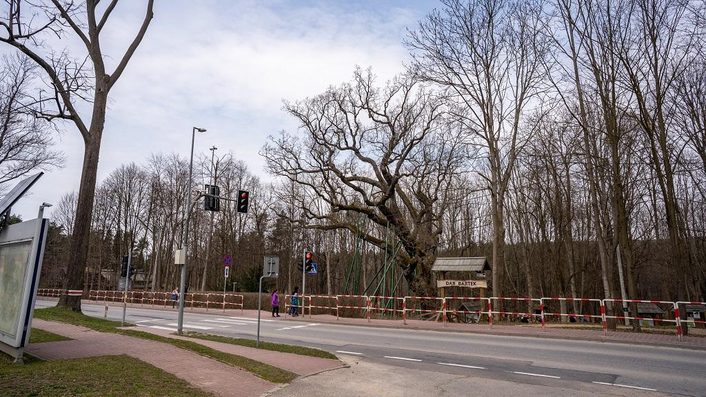 Dąb Bartek parking