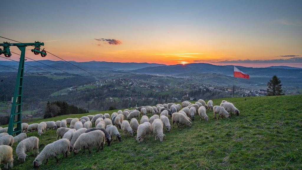 Owieczki na Ochodzitej