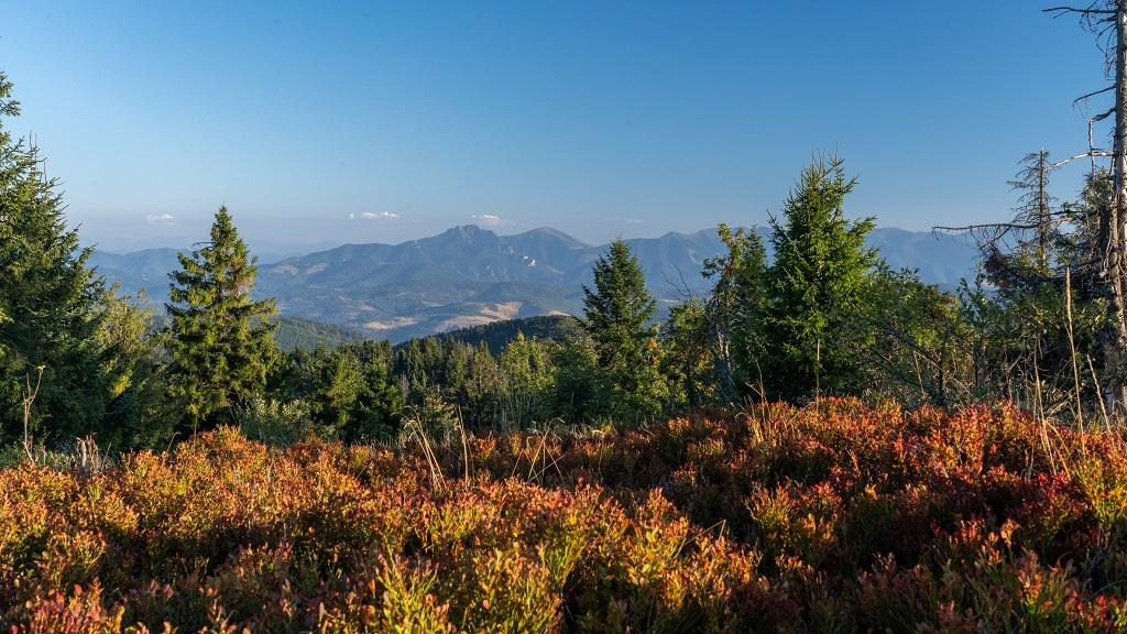 Wielka Racza panorama